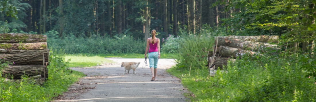 wandelen-dorpsbossen.jpg