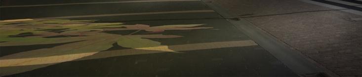 DRM herfstprojectie op het plein slideshow aangepast.jpg