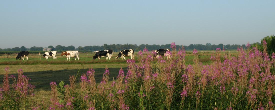 natuur-landbouw-1100x440.jpg