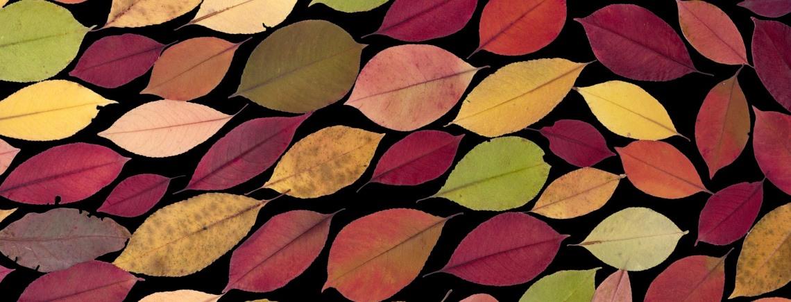 herfstblad kunstig 1140x435.jpg